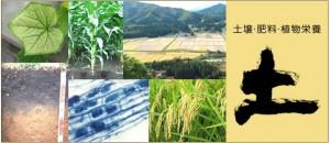 日本土壌肥料学会(セシウムの土壌への沈着を解説)